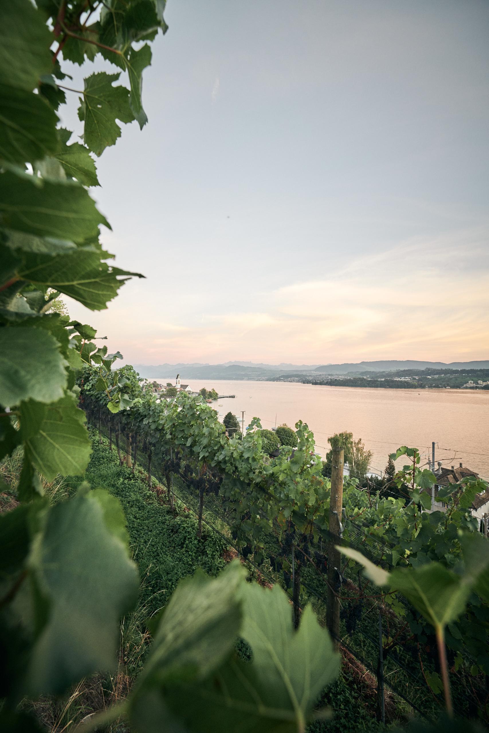 Alain Schwarzenbach, Schwarzenbach Weinbau Goldenerküste